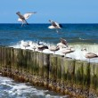 Sea piers and seaguls - Stock Photo