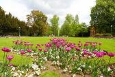 Beautiful park — Photo