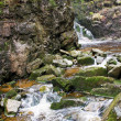Water on the rocks into the forest — Stock Photo