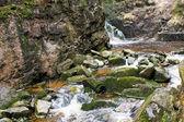 Orman içine buzlu su — Stok fotoğraf