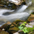 Beautiful river in forest — Stock Photo