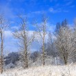 Stock Photo: Frozen trees in the winter