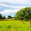 Apple orchard — Stock Photo #3149178