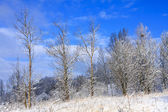 Frozen trees in the winter — Stock Photo