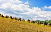 Golden wheat field under a blue sky — Stock Photo