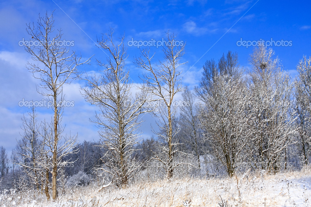 Frozen trees in the winter — Stock Photo #3143764