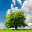 Green tree — Stock Photo #3183923