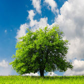 Árvore verde — Fotografia Stock