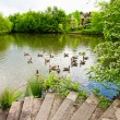 Beautiful lake with geese — Stock Photo #3263071