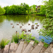 Beautiful lake with geese - Stock Photo