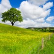 Tree on spring field — Stock Photo #3268609