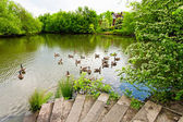 Beautiful lake with geese — Stock fotografie