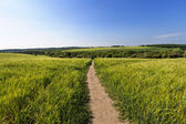 Agriculture with public path — Stock Photo