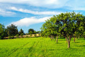 Apple orchard on blue sky — Stock Photo