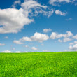 Field and blue sky - Stock fotografie