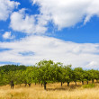 Apple orchard on blue sky - Stock Photo
