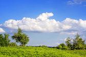 Natureza verde — Fotografia Stock