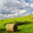 Stock Photo: Farmland with straw bales