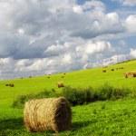 Farmland with straw bales — Stock Photo