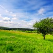 Green grass field landscape — Stock Photo