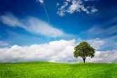 Tree on green meadow — Стоковое фото