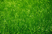 Green grass background — Photo