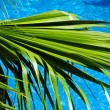 Palm tree and blue sea — Stockfoto