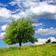 Tree on the field — Stock Photo #3650554