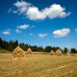 Country landscape — Stock Photo