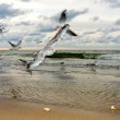Flying Seagulls at Sunset — Stock Photo