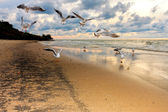 Seagulls flying over the beach at sunset — Stock Photo
