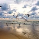 Seagulls — Stock Photo #3751220