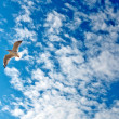 Seagull on blue sky — Stock Photo #3756253