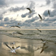 Flying Seagulls on Sunset - Photo