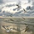 Flying Seagulls on Sunset - Stock Photo
