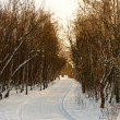 Stock Photo: Winter road at Sunset