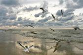 Flying Seagulls on Sunset — Stock Photo