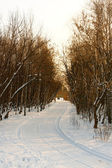 Winter road at Sunset — Stockfoto