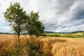 Sommar landskap — Stockfoto