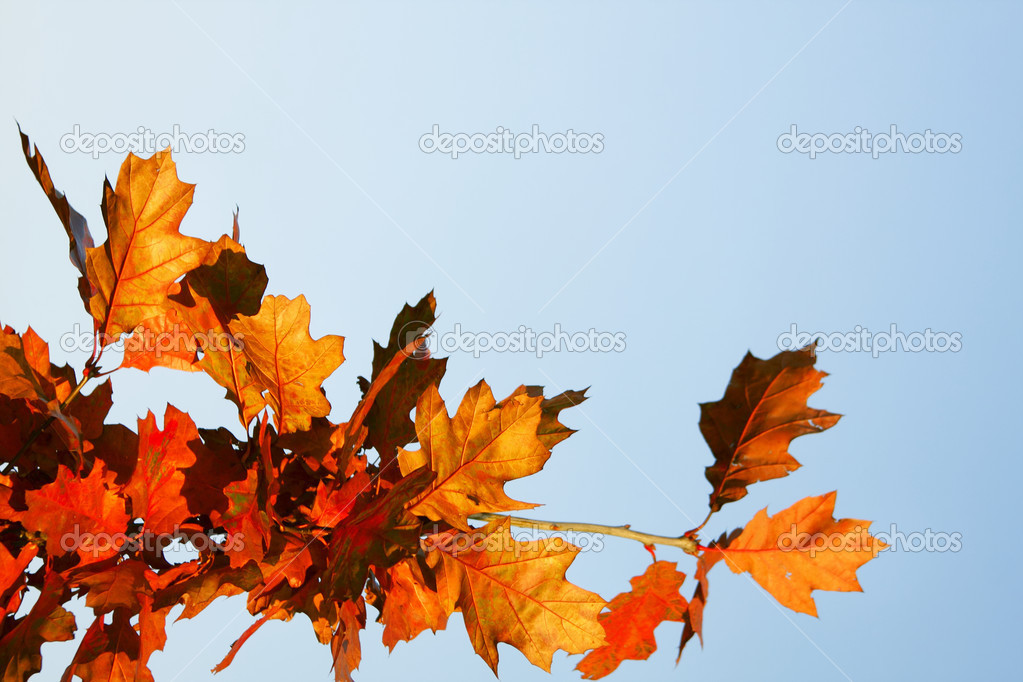 Autumn leaves — Stock Photo #3839914
