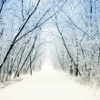 Winter alley — Stock Photo #3854394
