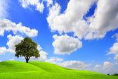 绿色风景 — 图库照片
