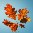 Vibrant fall leaves — Stock Photo