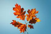 Vibrant fall leaves — Stock Photo