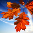 Autumn leaves on blue sky - Stok fotoğraf