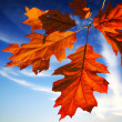 Autumn leaves on blue sky - Stock Photo