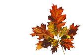 Orange Autumn Leaves — Stock Photo