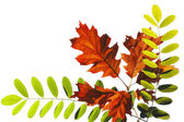 Světlé podzimní listí — Stock fotografie