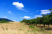 Mountain orchard on blue sky — Stock Photo