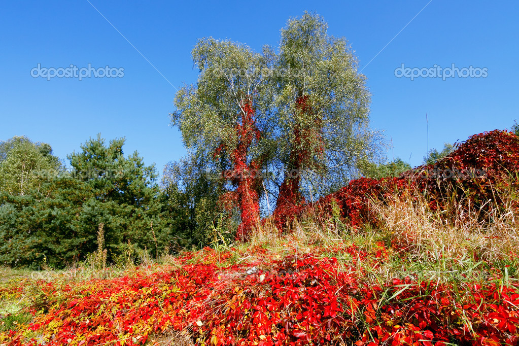 Vibrant autumnal colors  Stock Photo #3892400